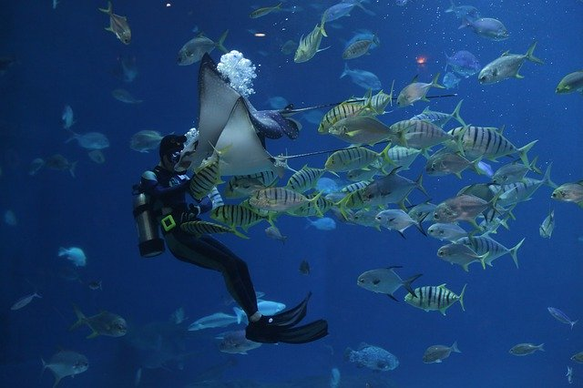 Scuba diving and fish